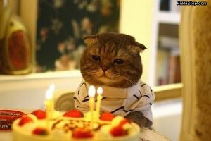 super_funny_hilarious_pictures_Its_My_Birthday_Cat